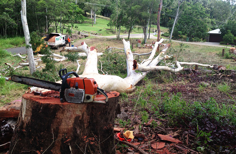 Cutting down Trees Whitsundays