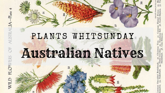 Seven Australian Native Plants we love!