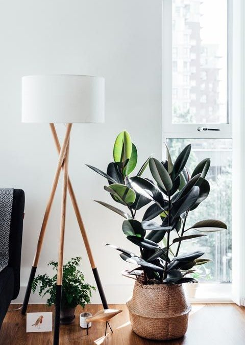 7 Trending Indoor Plants