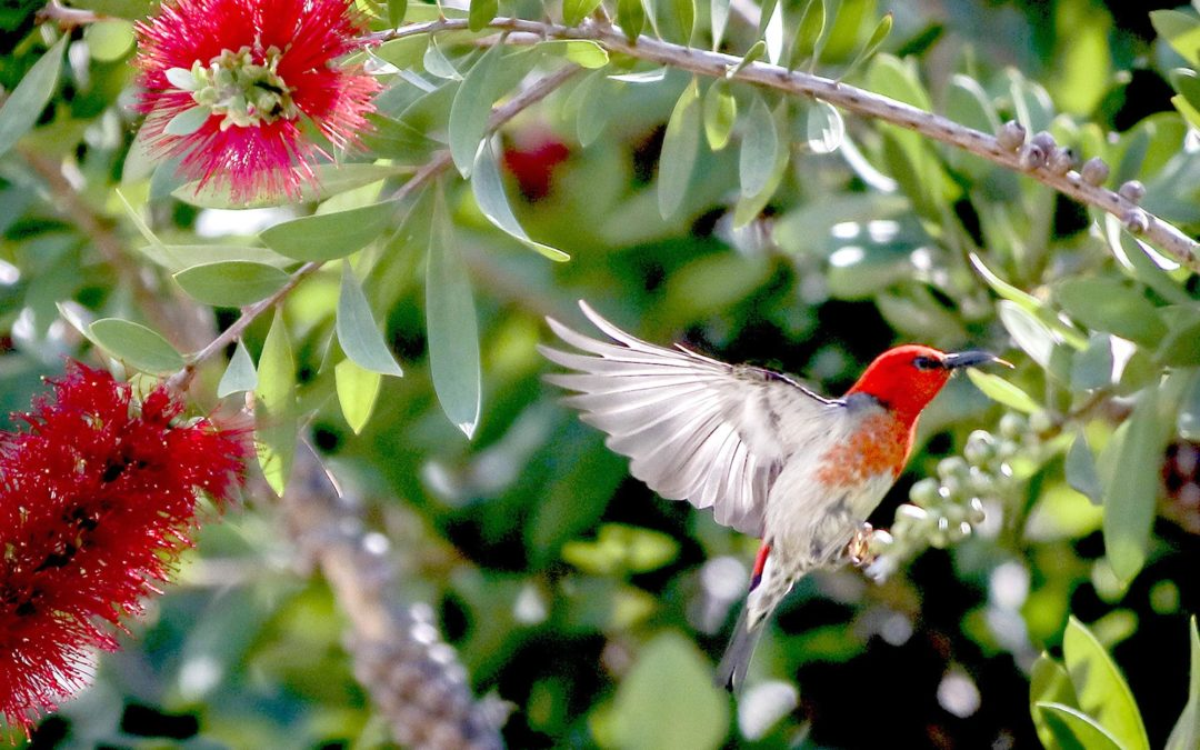 Plants to Attract Birds and Wildlife to Your Whitsundays Garden