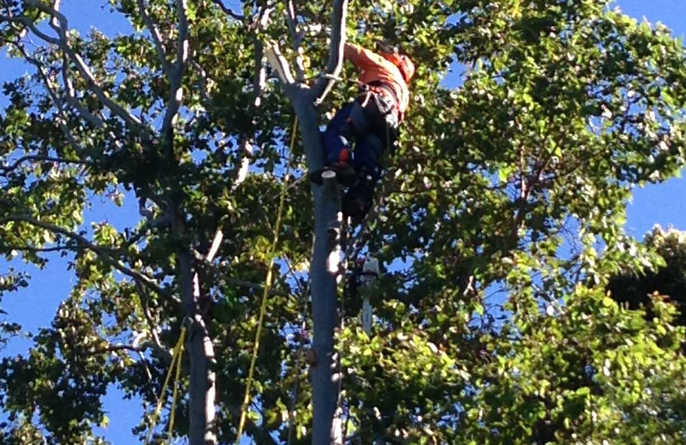 TREE SERVICES 2