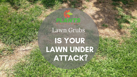 Is your lawn under attack?