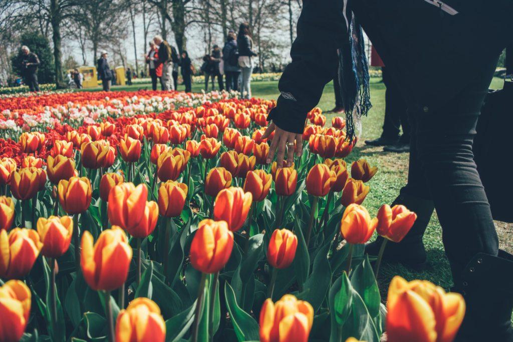 magnificent gardens netherlands