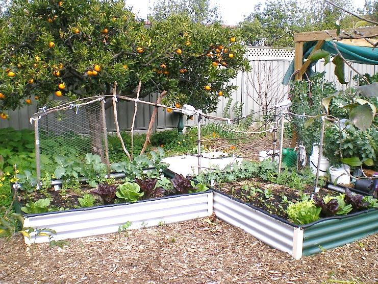 Planting Vegetables In The Tropics What To Grow When
