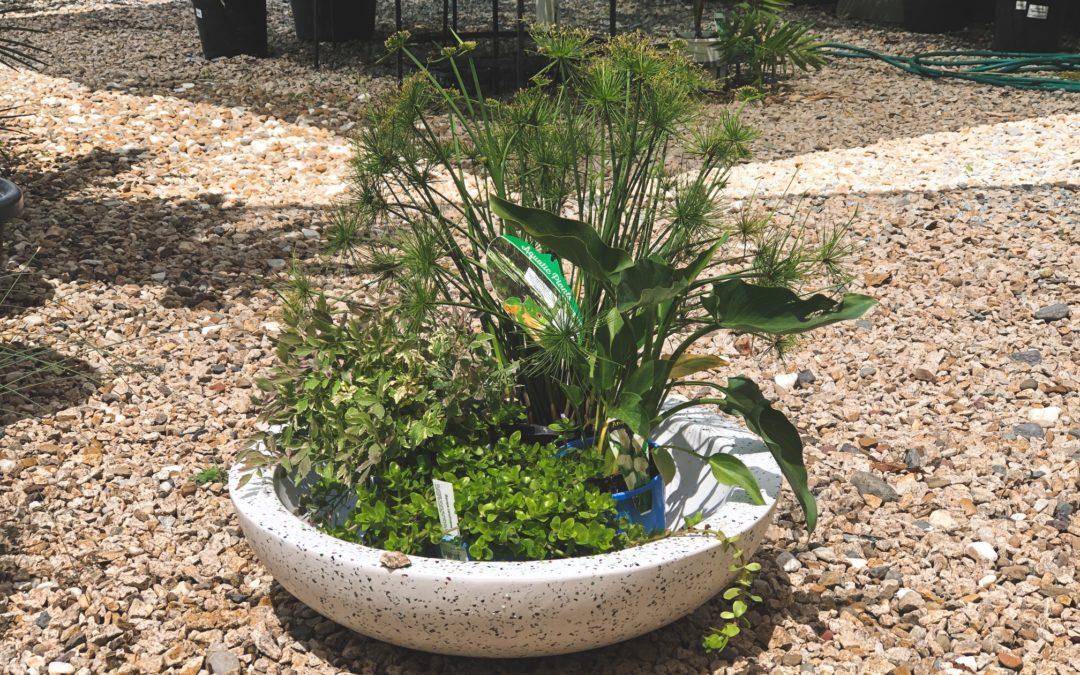Bog Gardens DIY