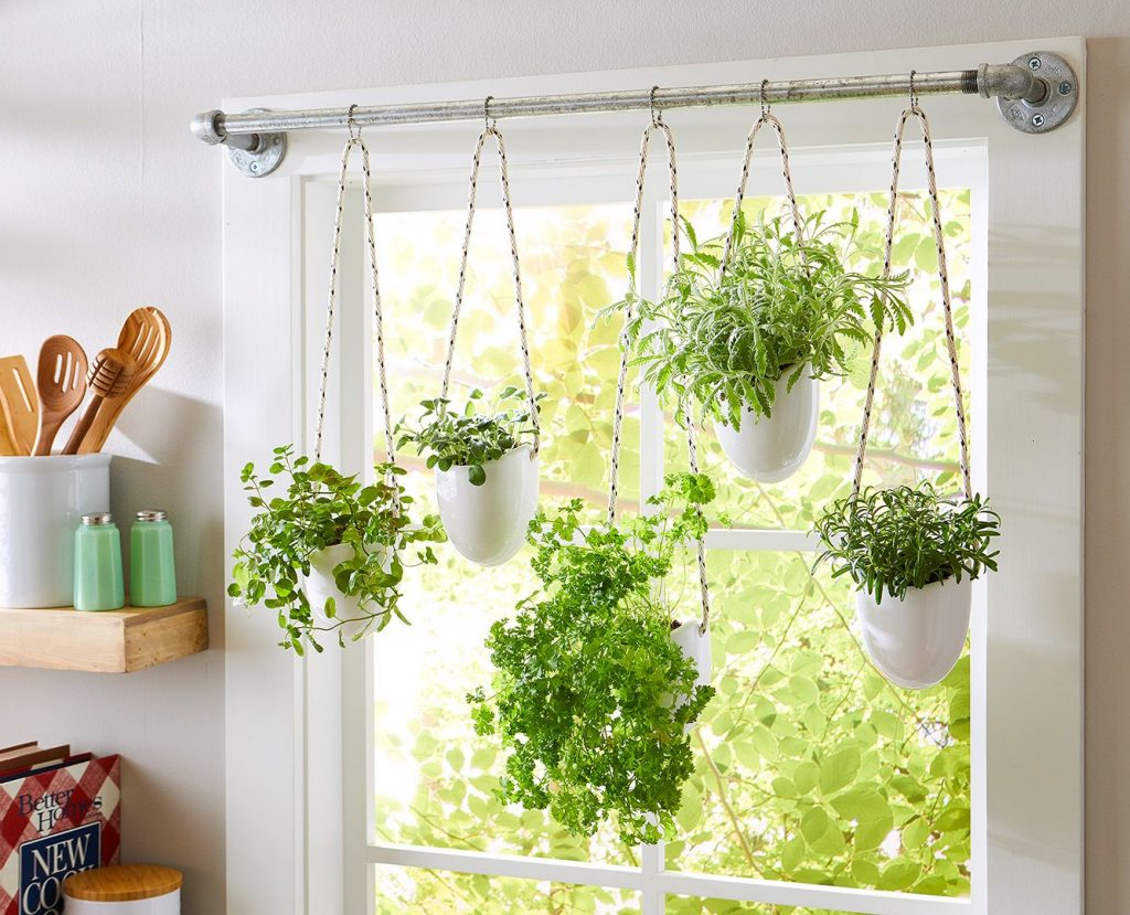 Window hangers make great space savers for a herb garden. Plants Whitsunday North Queensland Garden Centre